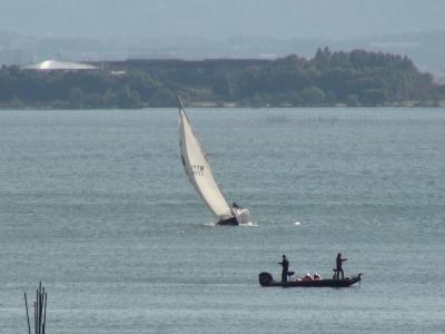 大きくバンクしながら琵琶湖南湖を帆走中のヨット(11月3日13時頃)
