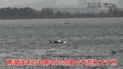 北湖は西風 南湖は南風!! 土曜日の琵琶湖は荒れてます(YouTubeムービー)