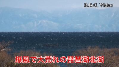 西寄りの爆風で白波立ちまくりの大荒れ!! #今日の琵琶湖(YouTubeムービー)