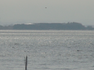 南西の強風で大荒れの琵琶湖南湖赤野井沖(2月4日10時30分頃)