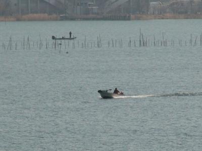 琵琶湖大橋西詰めから眺めた南湖 穏やかな湖面をボートがす滑らかに走ってます(2月6日12時頃)