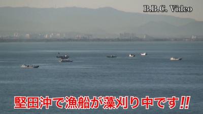 琵琶湖南湖堅田沖で漁船が藻刈り中です!! #今日の琵琶湖(YouTubeムービー)