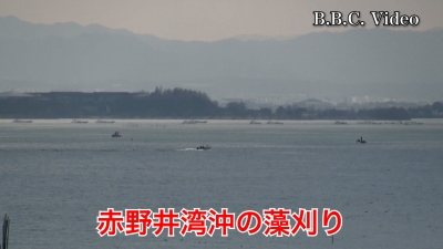 琵琶湖南湖赤野井沖の藻刈り!! #今日の琵琶湖(YouTubeムービー)