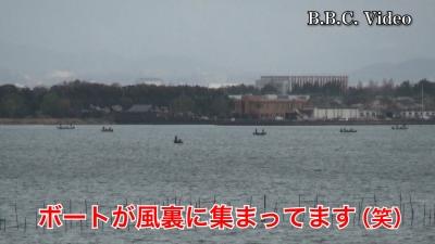 琵琶湖南湖は東寄りの強風!! ボートが木浜沖の風裏に集まってます #今日の琵琶湖(YouTubeムービー)