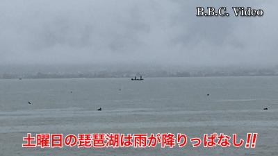 土曜日の琵琶湖は雨が降りっぱなし!! それでもがんばってるボートがいますよ〜 #今日の琵琶湖(YouTubeムービー)