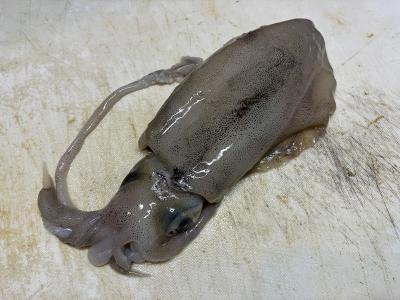大津市役所