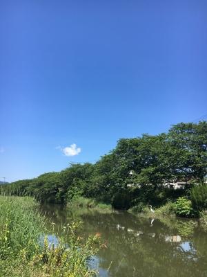 堅田周辺は終日ほぼ快晴のいい天気