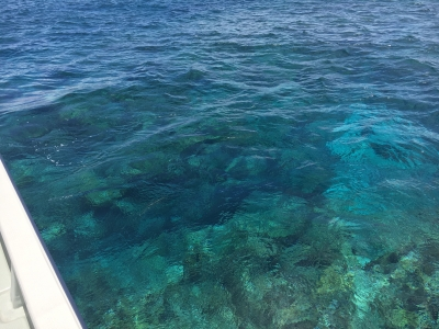 慶良間の海は水深5mを超えても底まる見えのすごい透明度
