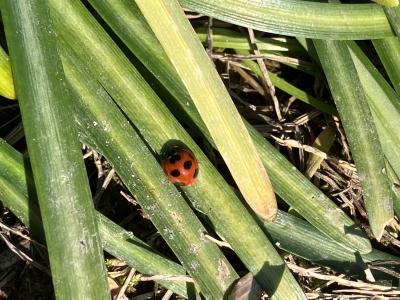 堅田周辺は雨が降ったり止んだり(7月30日10時頃)