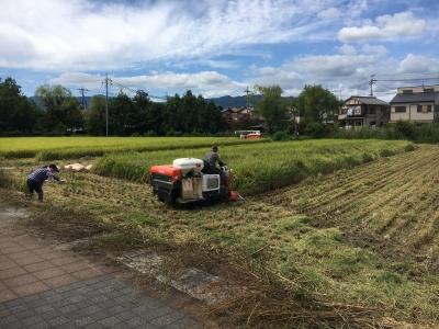 堅田の田んぼで稲刈りが始まりました