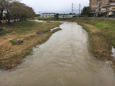 大雨による増水で泥濁りになった真野川(10月10日10時45分頃)