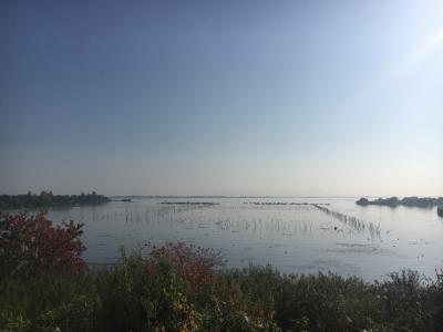 山ノ下湾から眺めた琵琶湖南湖(11月18日9時45分頃)