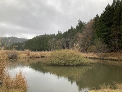 京都の山の中は北山時雨でした(11月26日14時頃)