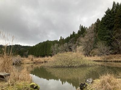 京都の山中は今日も北山時雨の弱い雨でした(12月3日11時頃)