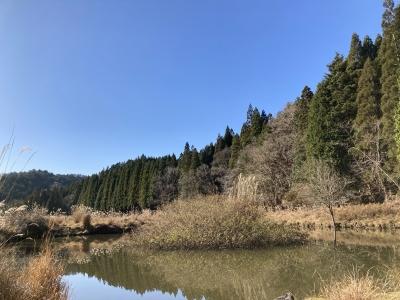 京都の山中は3回目でやっとよく晴れていい天気になりました(12月6日13時30分頃)