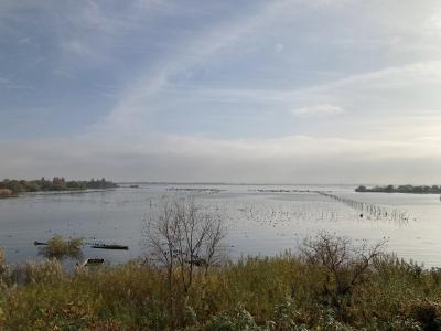 山ノ下湾から眺めた琵琶湖南湖は穏やかないい天気です(12月10日10時頃)