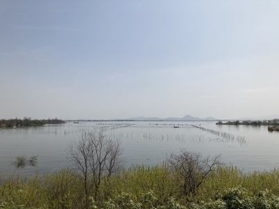 山ノ下湾から眺めた琵琶湖南湖は晴天微風の穏やかな言い天気です(4月1日10時45分頃)