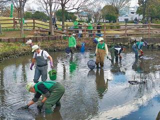 寒川中央公園の池で行われた清掃と生物調査