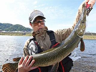 狩野川で1mのアリゲーターガーをキャッチした比留間重郎さん