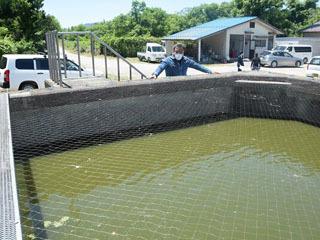 アユ畜養のために造られたプールをスッポン養殖に転用