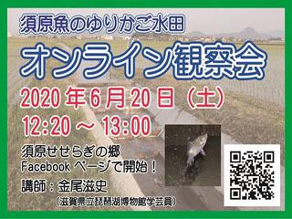 須原魚のゆりかご水田-オンライン観察会バナー