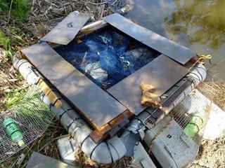 何者かの投石で壊された淀城跡公園のミドリガメ駆除罠