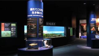 連れてこられた生き物たち (琵琶湖博物館 水族展示室) 2019年10月30日(YouTubeムービー)