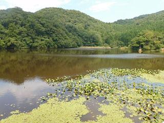 池の水だいぶ抜いて外来種がだいぶ駆除される予定の田海ケ池