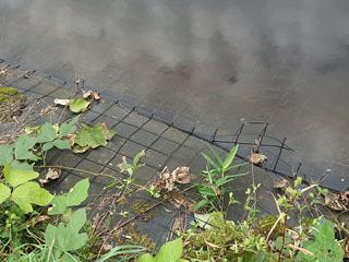 野池の岸に設置されたネット