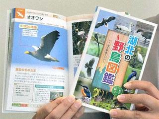 湖北の野鳥図鑑
