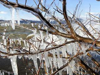 矢橋人工島で発生したしぶき氷