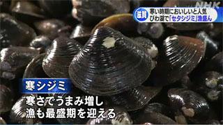 盛期迎えた琵琶湖のセタシジミ漁