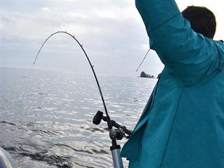 トローリングで狙うビワマス漁