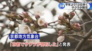 京都で統計開始以来最も早くサクラ開花(21/03/16)
