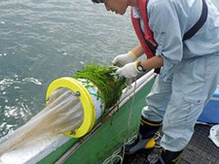 琵琶湖のマイクロプラスチック調査