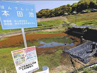 ナガエツルノゲイトウの駆除が行われている兵庫県洲本市の本田池