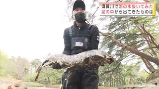 「池の水ほとんど抜く大作戦」で捕獲されたコイ