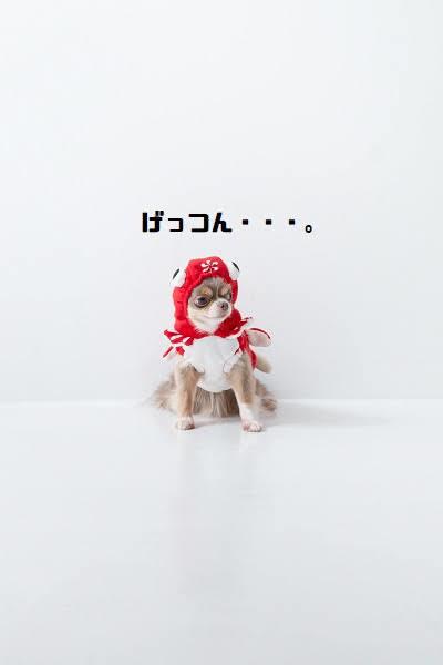 009_20201106202707ca1.jpg