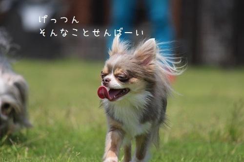 IMG_7589.jpg