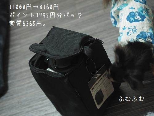 P9080010.jpg