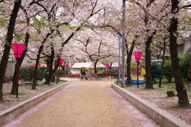 ベネシード 桜