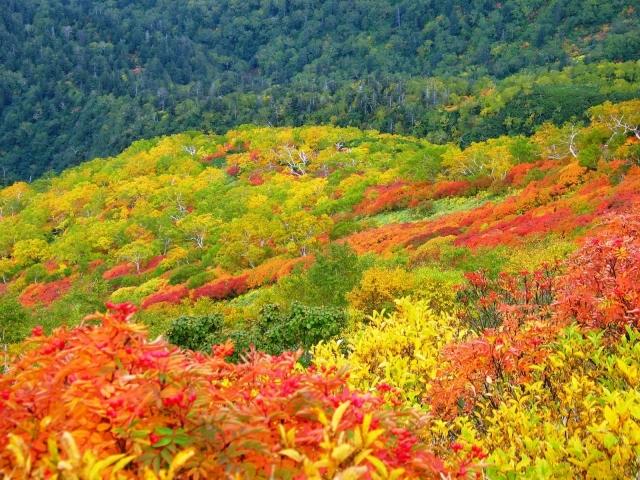 ベネシード北海道紅葉