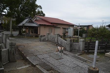 20200307夷隅神社06
