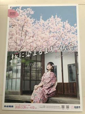 20200326桜.03
