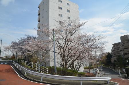 20200327桜01