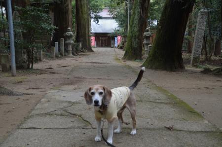 20200330東金日吉神社09