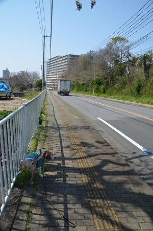 20200402佐倉の桜と桜城址公園11
