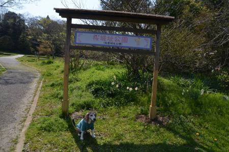 20200402佐倉の桜と桜城址公園13