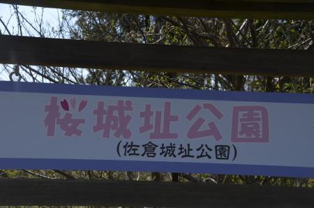 20200402佐倉の桜と桜城址公園14