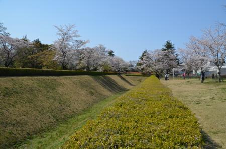 20200402佐倉の桜と桜城址公園20